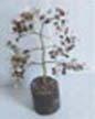 Luck Tree